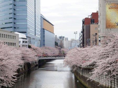 目黒川(目黒駅周辺)