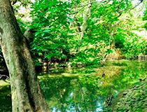 三菱財閥岩崎家が愛した地、本郷