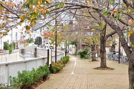 神田川遊歩道