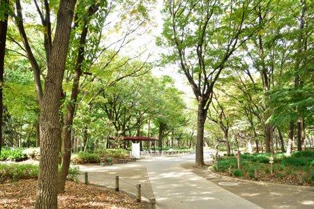 新宿中央公園区民の森