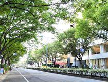 流行発信地としても注目のケヤキ並木が彩る街、表参道