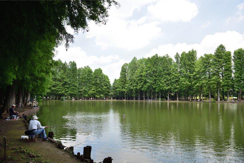 水辺の緑が美しい「別所沼公園」
